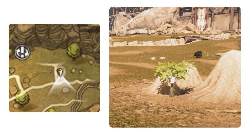Расположение чайных листьев